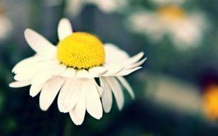 PicMonkey - A Free Photo Editor in Your Browser | Tasha Alieya | Scoop.it