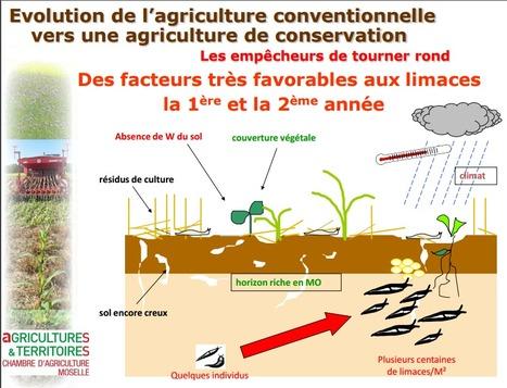 L'agriculture de conservation en Lorraine (2) | agriculture de conservation | Scoop.it