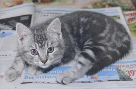 Enterré vivant, le chat a été retrouvé mort | CaniCatNews-actualité | Scoop.it