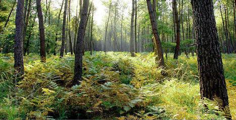 Vos rendez-vous « Nature et Environnement » dans la Vienne | Histoire, Patrimoine, Nature en Loudunais | Scoop.it