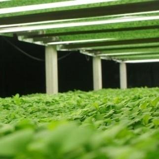Farming News - World's largest vertical farm opens in Chicago | Urban Aquaponics Farm | Scoop.it