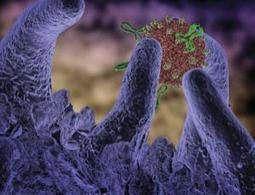 Twin attack could deliver universal flu vaccine - health - 19 December 2012 - New Scientist | Biología Celular e Inmunología | Scoop.it