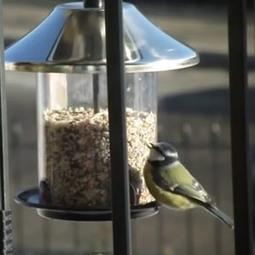 Nourrir les oiseaux sur son balcon en hiver | Ornithomedia.com | Maison ossature bois écologique | Scoop.it