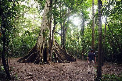 Doctorado en Estudios Amazónicos, novedad de la UN | ACIUP | Scoop.it