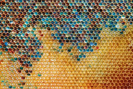 En Alsace, les abeilles butinent le sucre des poubelles faute de fleurs - National Geographic | Archivance - Miscellanées | Scoop.it