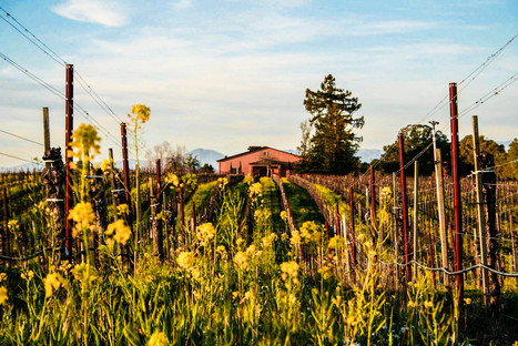 TASTING THE TERROIR OF THE RUSSIAN RIVER VALLEY | Pinot Post | Scoop.it