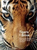 Publications   WWF   Year 7 Science: Endangered Species – Tigers across Asia   Scoop.it