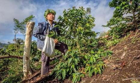 Future demand and climate change could make coffee a driver of deforestation | Coffee News | Scoop.it
