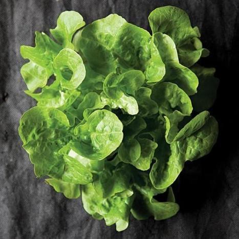 A Greens Glossary | Garden Design | Vegetable Gardening Resources | Scoop.it