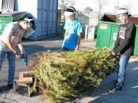 Fish get new homes from Christmas trees - Willows Journal | Fish Habitat | Scoop.it