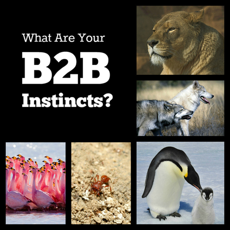 What Are Your B2B Instincts? | Digital-News on Scoop.it today | Scoop.it