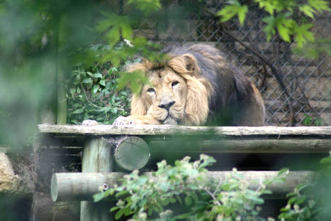 Britain's Most Famous Wildlife Park Owner Wants All Zoos Abolished ... | Zoos should not exist | Scoop.it