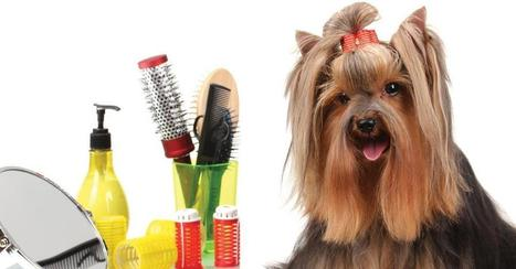 Simple Tips to Groom Dogs at Home – Save Money on Veterinary Grooming | Napa Valley Animal Hospital | Scoop.it