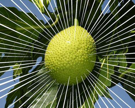 The Economic Case for Loving This Spiky, Tropical Fruit | Vertical Farm - Food Factory | Scoop.it