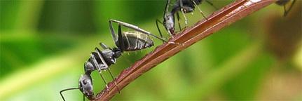 3 recettes contre les moustiques et les insectes | Actus Bien-être - Santé | Scoop.it
