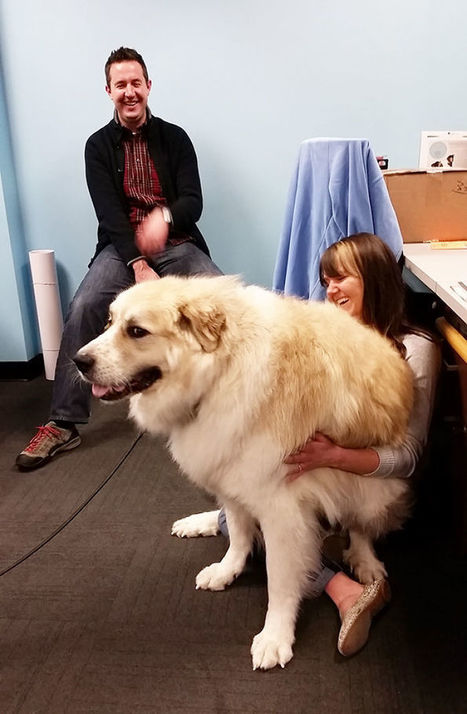 Giant Dog Breeds | Glinda Cargill | Scoop.it