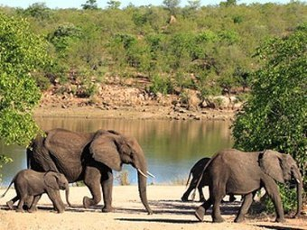 Tanzania considering US proposal to use drones in anti-poaching ops | DefenceWeb | Wildlife Trafficking: Who Does it? Allows it? | Scoop.it