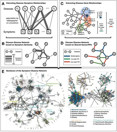 Diseases, symptoms, genes, and proteins linked together in giant network | Complex World | Scoop.it