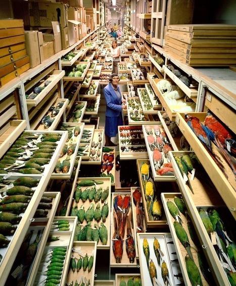 Dans les collections du Smithsonian's Museum of Natural History | adn-dna.net: cajón de sastre | Scoop.it