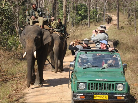 Unravel the natural treasures in India | Wildlife tours in India | Scoop.it