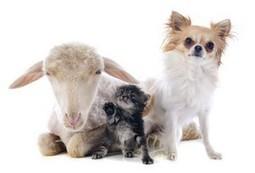 Quelques expressions rares citant des animaux | Correctrice Web | Correctrice-Web | Scoop.it