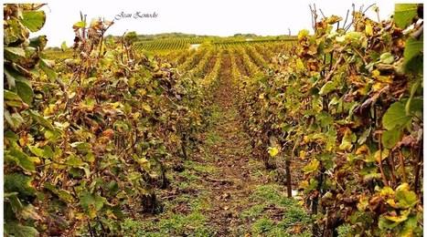 Le vin français : comment le boire devient culture | Ressources FLE | Scoop.it