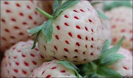 ... Bleach-friendly strawberries ?! | BBC's Weird & odd pictures | Looks -Pictures, Images, Visual Languages | Scoop.it