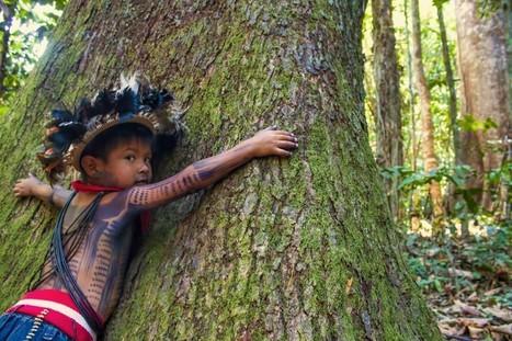 Ce chef indien qui combat la déforestation de l'Amazonie au prix de sa vie | TRANSITURUM | Scoop.it