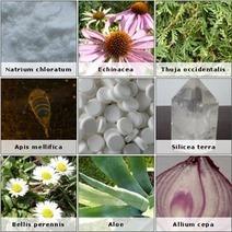 Anexo:Preparados homeopáticos - Wikipedia, la enciclopedia libre | Homeopatia | Scoop.it