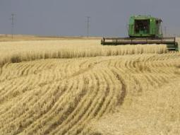 Russia rules out grain export ban - Independent Online | BizGlobal Oregon | Scoop.it