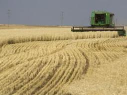 Russia rules out grain export ban - Independent Online   BizGlobal Oregon   Scoop.it