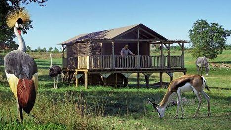 Au zoo, dormir avec les animaux devient incontournable - Le Figaro - Le Figaro | Découvrir Malicorne-sur-Sarthe et ses trésors | Scoop.it