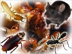 Keeping Away all Pest and Termites with Pest Control in Brisbane   Sweet Hollywood   Scoop.it