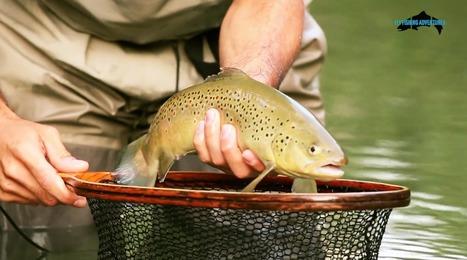 Pesca a Mosca alle Trote ad Ascoli Piceno | Le Marche un'altra Italia | Scoop.it