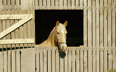 Why the long face? Traditional stables make horses depressed | Fun with Horses | Scoop.it