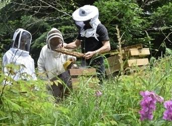 Vosges : les abeilles n'ont pas fait le printemps | Filière apicole française | Scoop.it