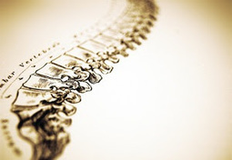 Success of Chiropractors in Charlotte, NC | Chiropractic Care | Scoop.it