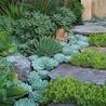 Gardening Green