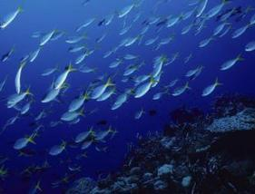 Eight Key Points of Blue Ocean Strategy | New Leadership | Scoop.it