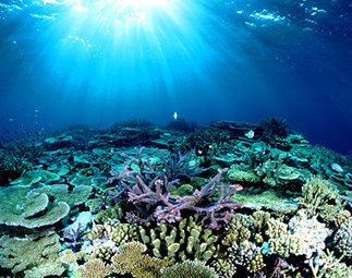 Whats Mesmerizing about the The Great Barrier Reef   Holiday Destination   Scoop.it