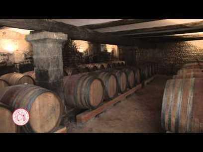 Bienvenue - Pique-Nique chez le Vigneron Indépendant | Wine and Co | Scoop.it