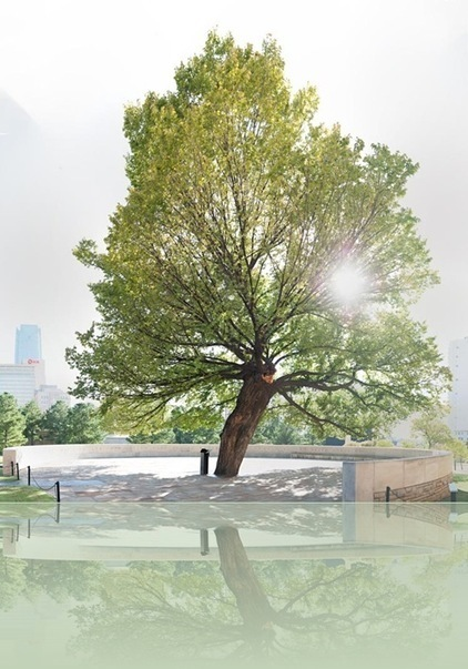 Wordless Wednesday: Survivor Tree at the Oklahoma City National Memorial - Backyard Wisdom | Good Gardening News and Advice | Scoop.it