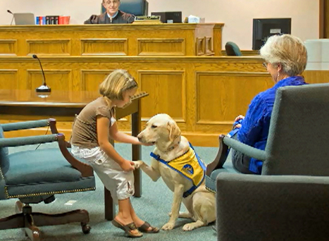 Courthouse Dogs--Promoting Justice with Compassion | Empathy and Animals | Scoop.it