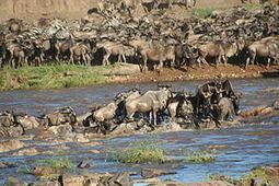 Serengeti - Wikipedia, the free encyclopedia   terry geo 152   Scoop.it