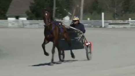 Horsemen fighting to keep harness racing alive in New Brunswick | NovaScotia News | Scoop.it