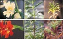 Flower color as a model system for studies of plant evo-devo | plant cell genetics | Scoop.it