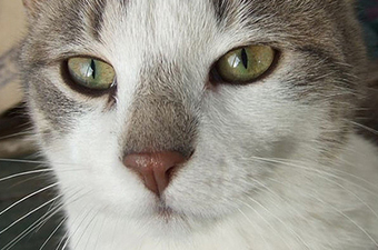 Feral cats? Minneapolis to consider St. Paul's approach to the problem | Minnesota Pet News | Scoop.it