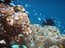 Los océanos ocultan el cambio climático | Mareas Bajas | Scoop.it