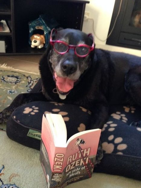 Meet Gus. Gus loves to read. #gusreads #growlingwithgus | What is a teacher librarian? | Scoop.it