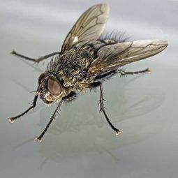 Catching Flies with Chopsticks | digitalNow | Scoop.it